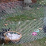 Puppy pen small with 6 panels