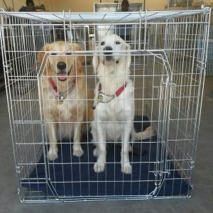 Dog / Cat Crates - Fold-Up - Standard Deluxe