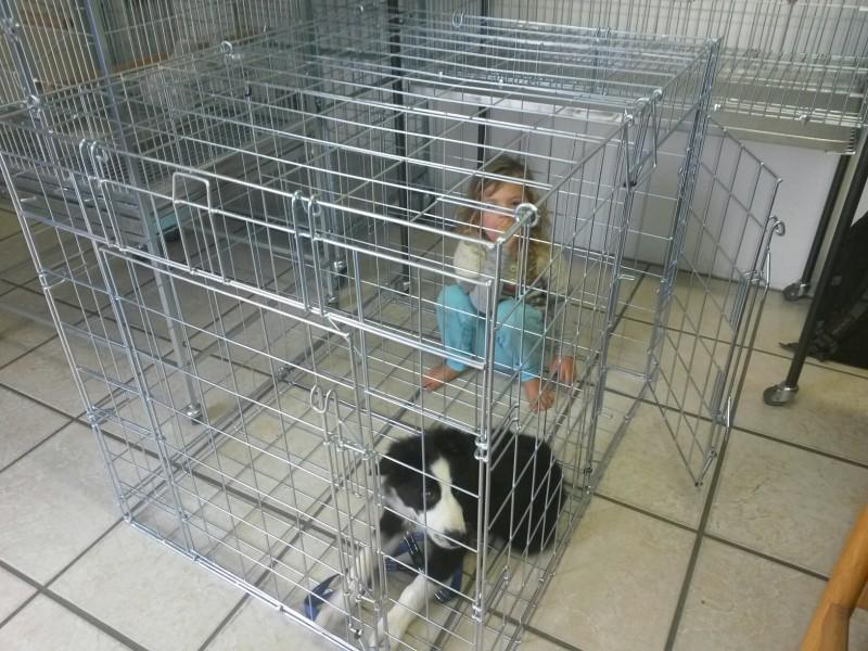 xlarge foldup folding flatfolding dogcat crate