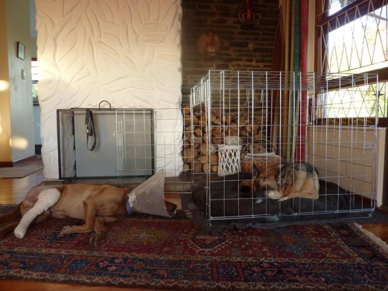 Indoor cat crate
