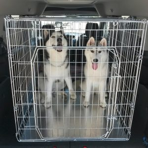 DOG CRATES, STANDARD DELUXE TYPE, Flat Folding (Fold Up) Use For Dog Shows,  Puppy Training, Recuperation After Surgery, Car Travel, Indoor Kennel, ...