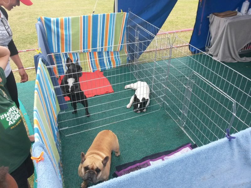 Flatfolding Dog Enclosure/Pen with 10 medium Add-on Panels | Pet ...