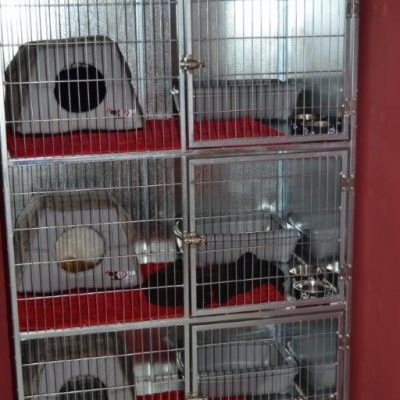 Voel Hokke Bird Cages Pet Creations